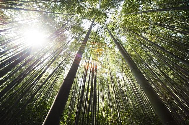 ancient-echoes-meditation-bamboo