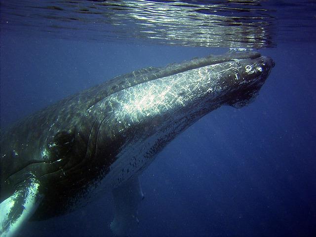 ancient-echoes-meditation-music-humpback