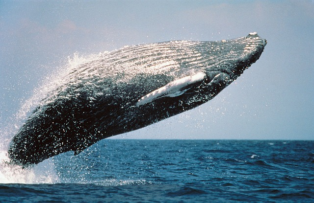 Ancient-Echoes-Whale-Song-Relaxing-Music-2